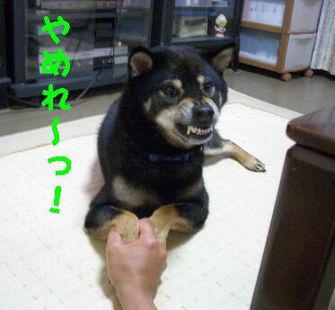 20080704_1