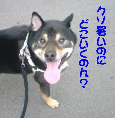 20080708_1