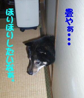 20080711_1
