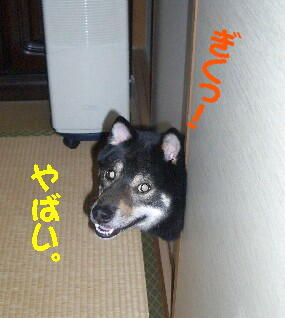 20080711_2