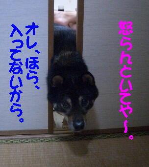 20080711_3