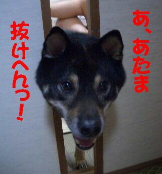 20080711_5
