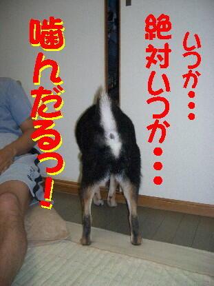 20080711_7