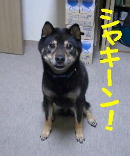 20080713_1