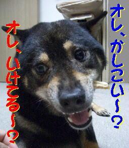 20080713_5