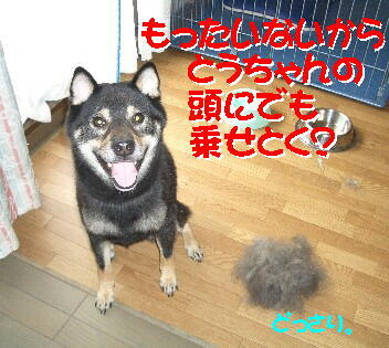 20080715_5