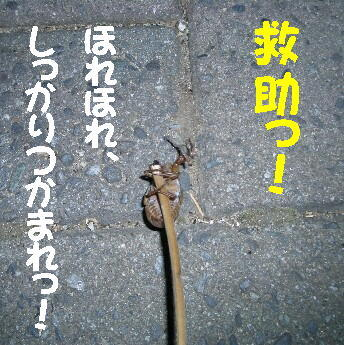 20080718_7