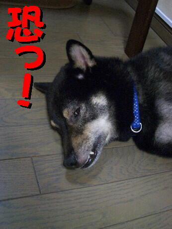 20080720_7_2