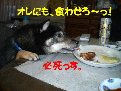 20080722_5