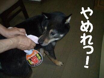 20080725_4