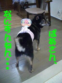 20080725_5