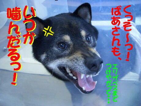 20080725_7_2