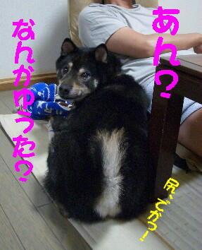 20080731_2
