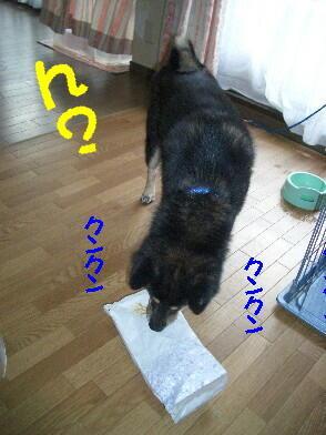 20080806_1