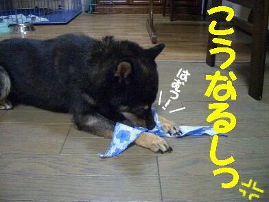20080808_4_4