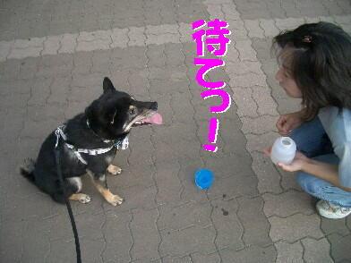 20080819_7