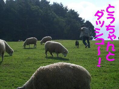 20080920_7