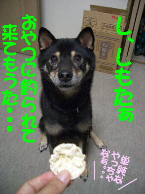 20080923_5