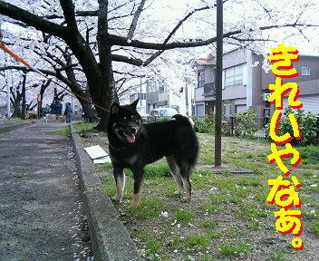 20081011_11