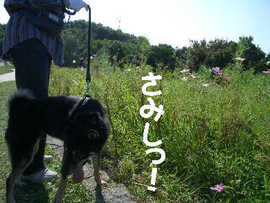 20081021_8