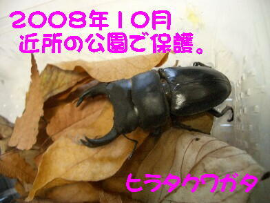 20081024_3