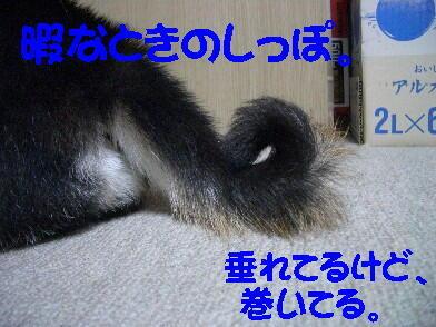 20081024_6