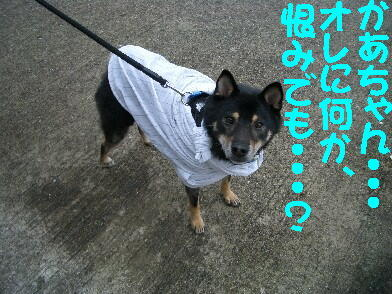 20081031_3