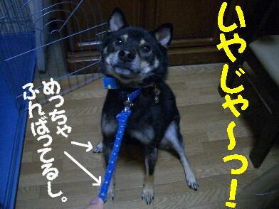20081103_3