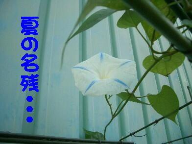 20081104_6_2