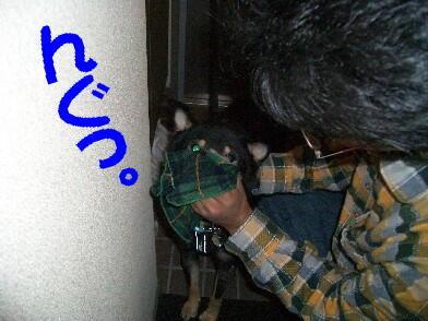 20081115_1