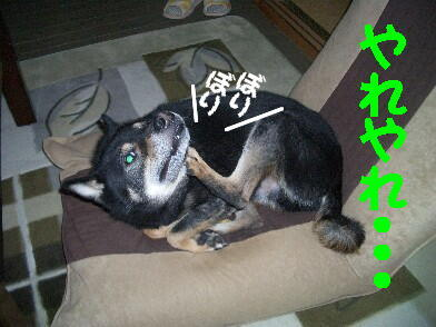 20081115_10
