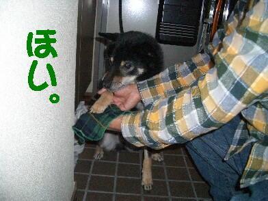 20081115_3