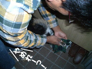 20081115_7
