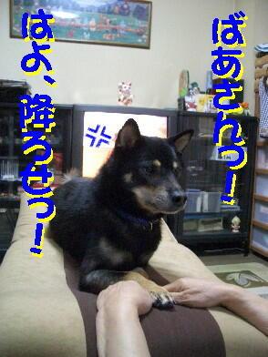 20081119_5