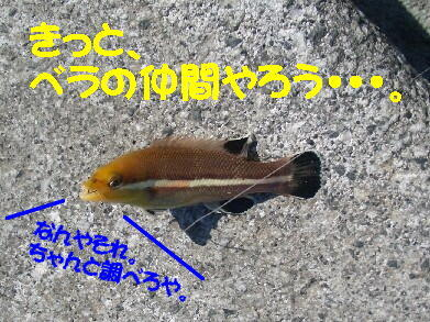 20081125_6