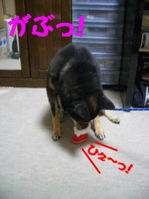 20081225_3