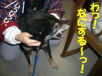 20090108_1