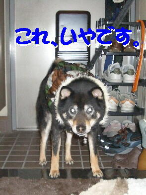 20090119_3