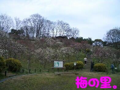 20090306_7