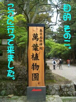 20090429_5