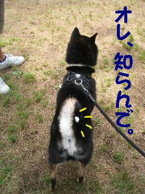 20090516_1_13