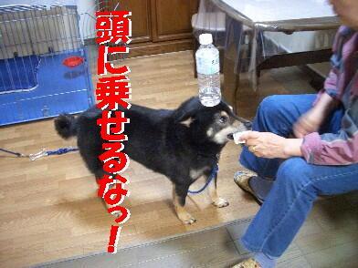 20090731_11