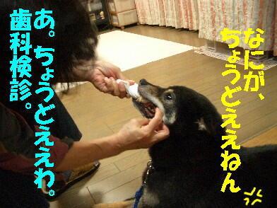 20090731_8