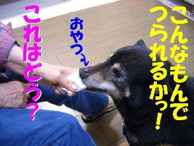 20090731_9