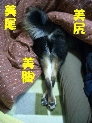 20090127_1_2