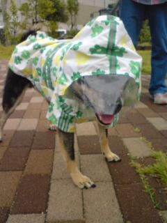 今日も、雨散歩。