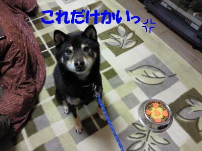 20100314_2_3