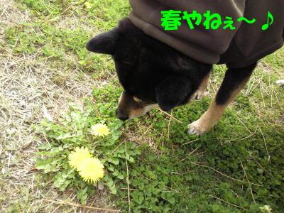 20100329_2_2