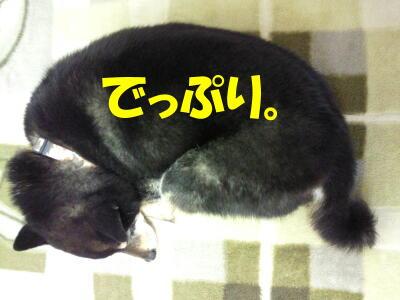 20100329_5_5