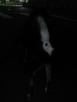 今の季節は、夜散歩なのです。